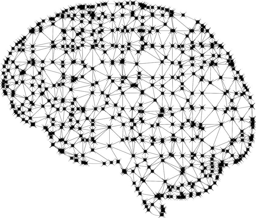 connexions neuronales